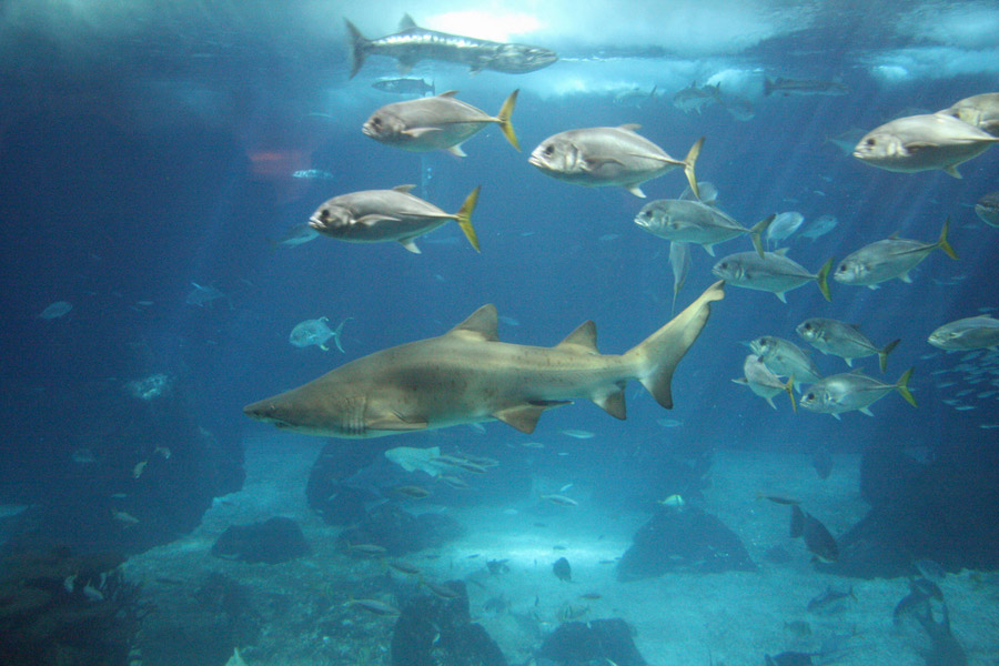 aquarium-lisboa-