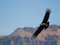 Le guide du road trip dans La Pampa Argentine